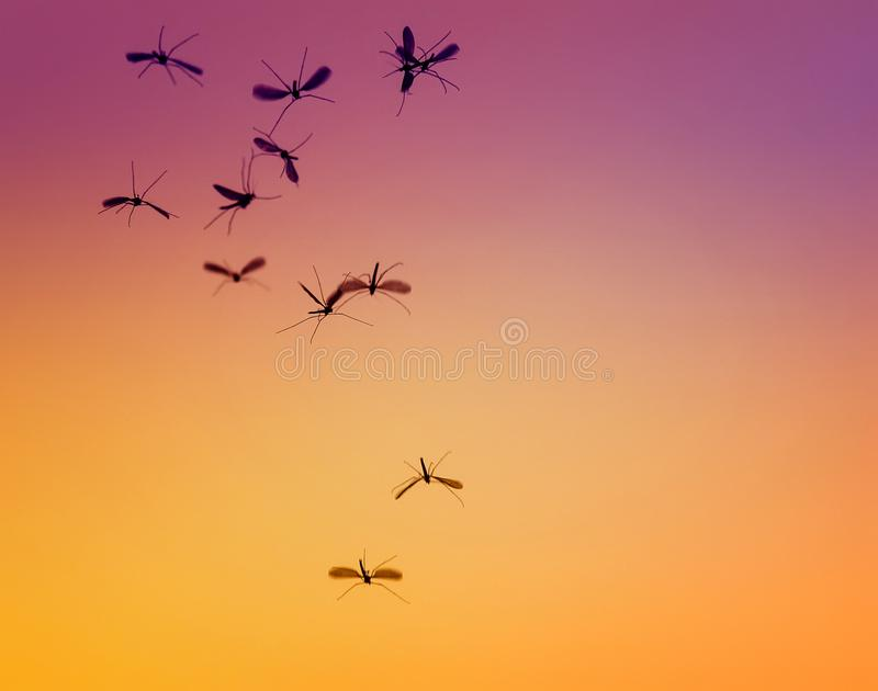 Bündel kleine gefährliche Insektenmoskitos fliegt gegen stockfoto