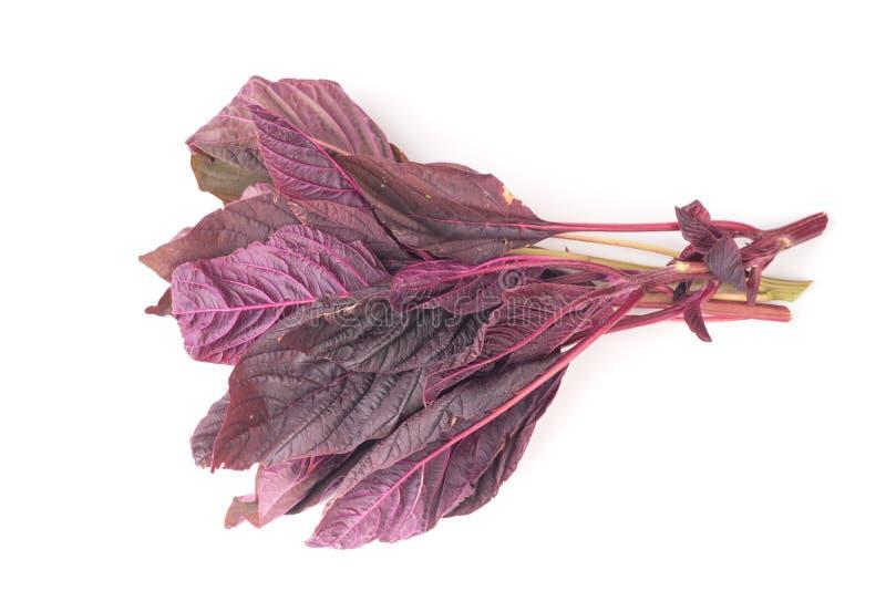 Bündel organische Salatblätter des roten Amarants stockbilder