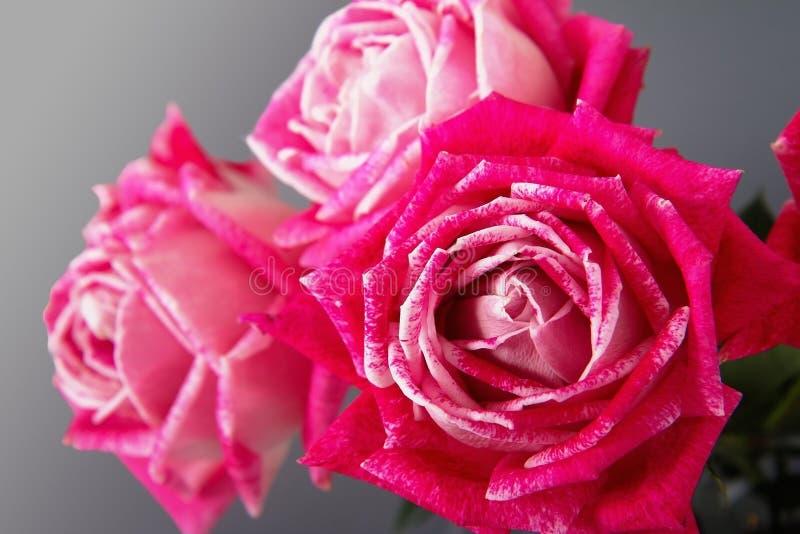 Bündel rosa Rosen auf einem grauen Hintergrund stockfotografie