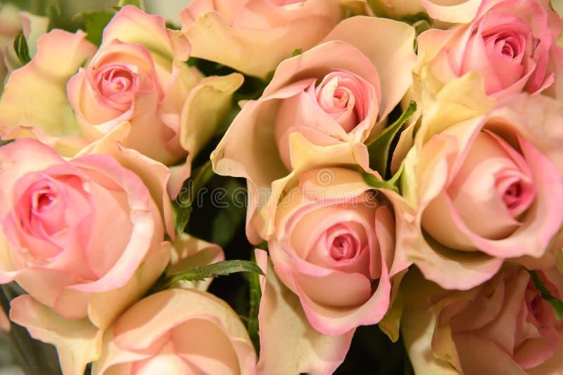 Bündel rosafarbene Rosen stockbild