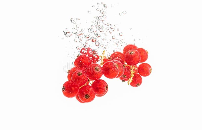Bündel rote roten Johannisbeeren, die in das klare Wasser, lokalisiert auf weißem Hintergrund sinken lizenzfreie stockbilder