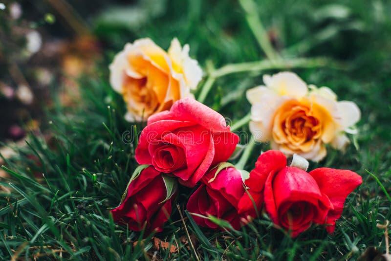 Bündel rote und gelbe Rosen stockfotos