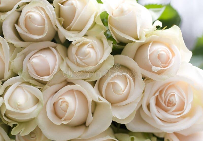 Bündel schöne Rosen lizenzfreies stockfoto