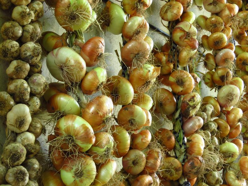 Bündel selbstgezogene organische Zwiebeln und Knoblauchhängen Organischer gelber Zwiebelhintergrund lizenzfreie stockbilder