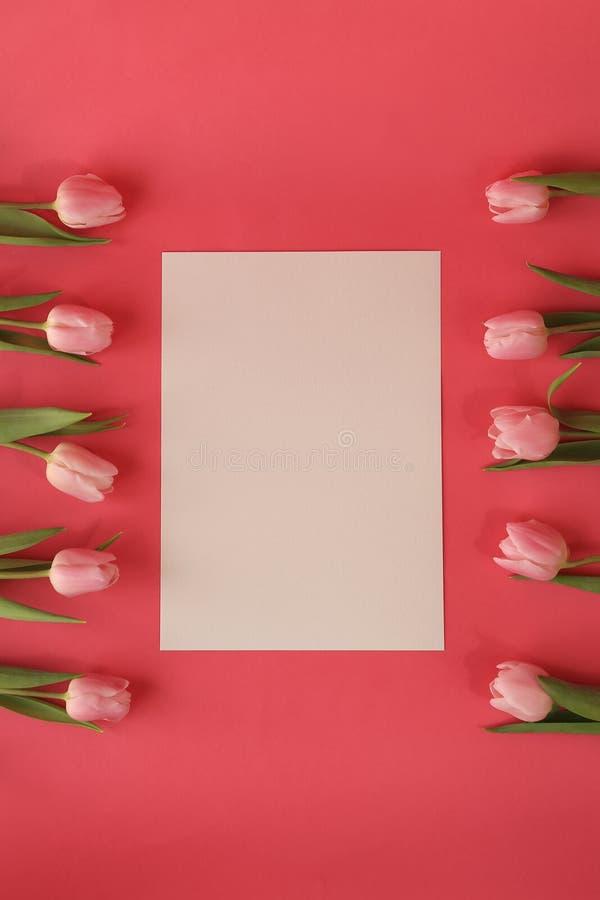 Bündel Tulpen auf rosa Hintergrund stockfoto