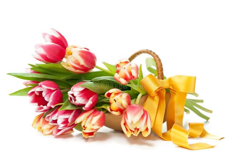 Bündel Tulpen in einem Vase formte als Korb lizenzfreies stockbild