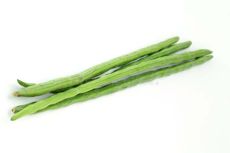 Bündel von Moringa.oleifera stockbild
