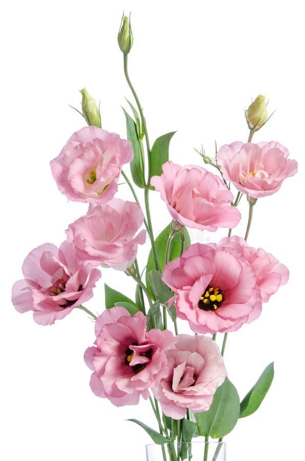 Bündel von rosa Eustoma blüht im Glasvase lizenzfreies stockfoto