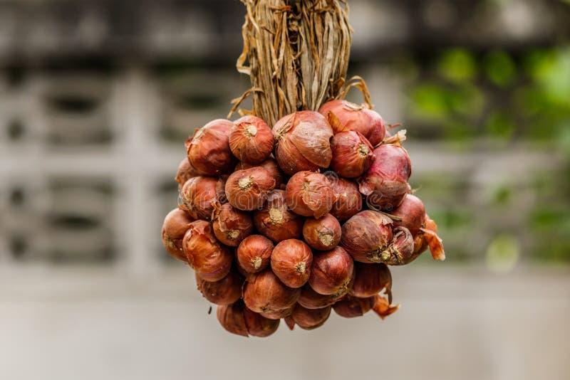 Bündel Zwiebeln in einem Büschel von buntem stockbild