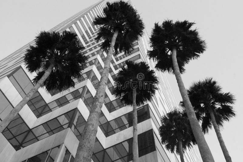 Bürogebäude mit Palmen stockfoto