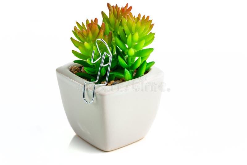 Büroklammer-Charakter saß mit einer Kaktuspflanze stockfotos