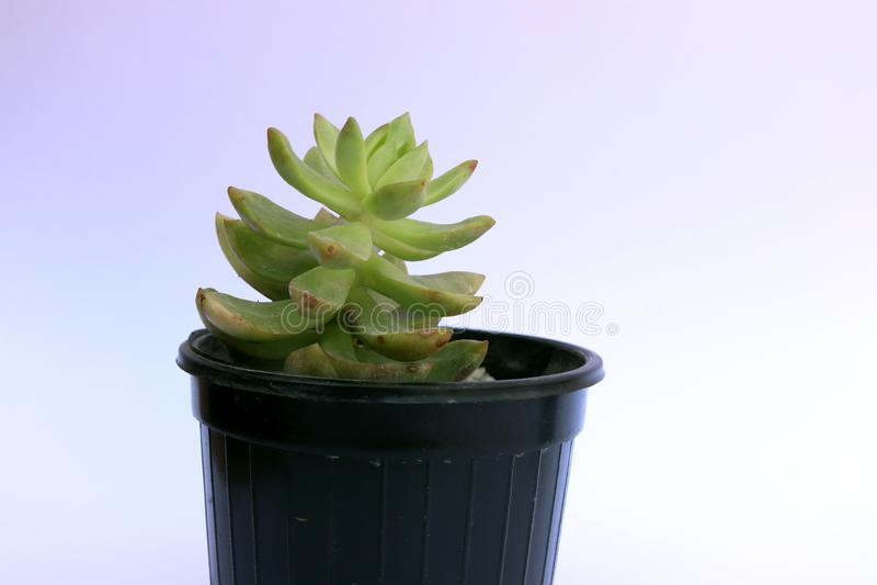 Bürozimmerpflanzetopf für Ihren Schreibtisch stockfotografie