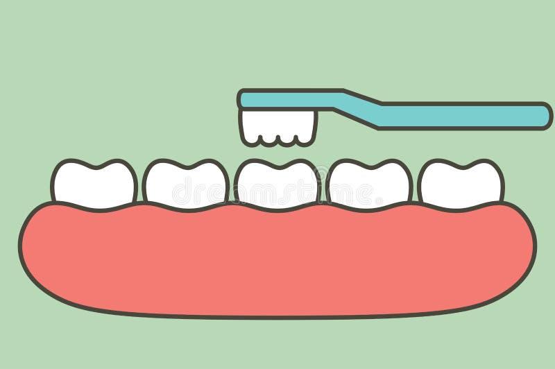 Bürstende Zähne auf Gummi und Zahn vektor abbildung