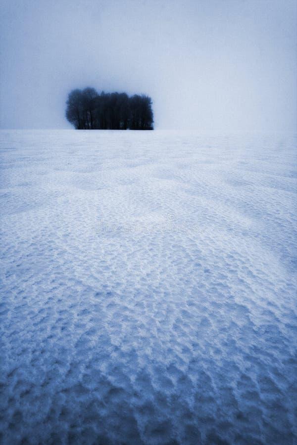 Büschel der Bäume im Winter stockbilder
