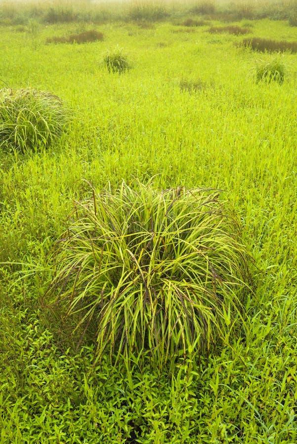 Büschel des Grases auf dem Gebiet stockfotografie