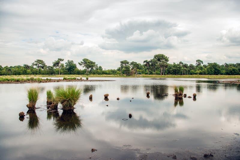 Büschel des Grases reflektierten sich in der glatten Wasseroberfläche des Spiegels lizenzfreie stockfotos