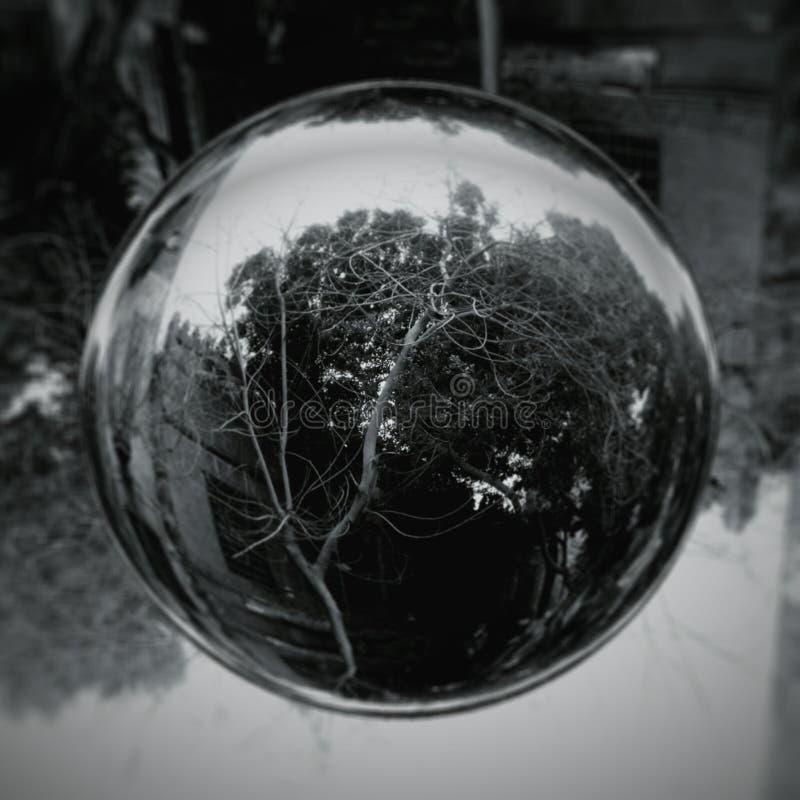 Bąbel drzewo obrazy stock