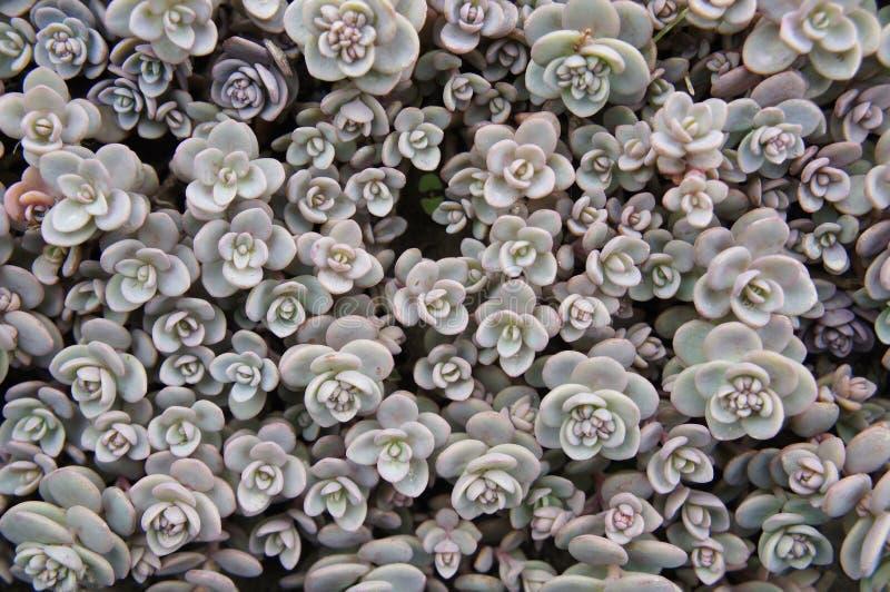 Bączaste rośliny fotografia stock