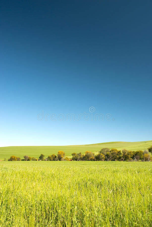 błękit śródpolna nieba banatka obraz stock