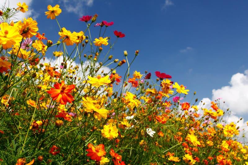 błękit chmurnieje kolorowych nieb biel wildflowers obrazy royalty free