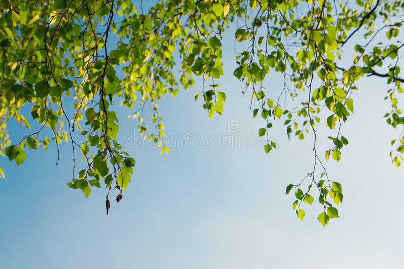 błękit gałęziasty ulistnienia zieleni niebo fotografia royalty free