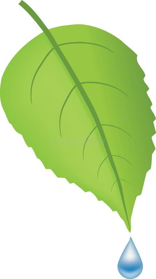 błękit kropli zieleni liść woda zdjęcia stock