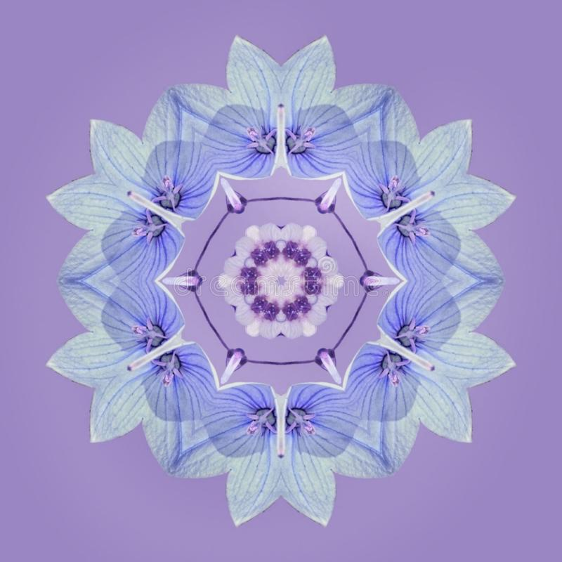 Błękit kwitnie w mandala ilustracja wektor