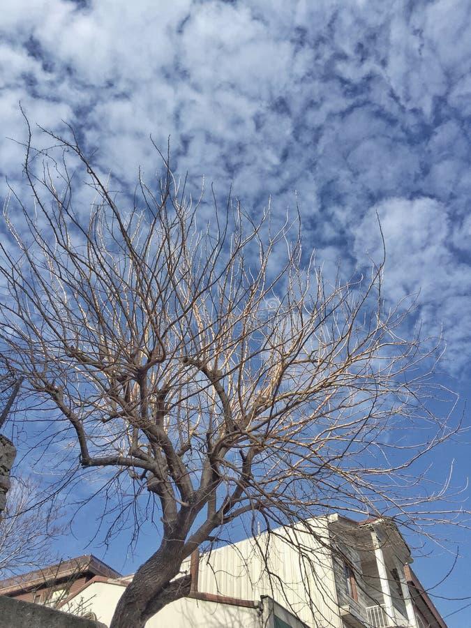 błękit nieba oddziały przeciw drzewo obrazy stock
