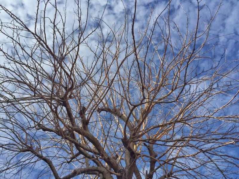 błękit nieba oddziały przeciw drzewo zdjęcie stock