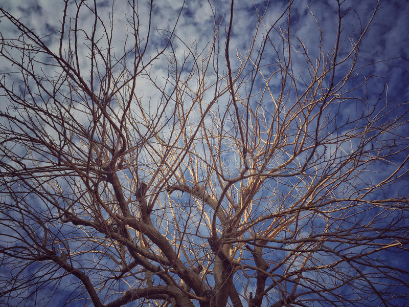 błękit nieba oddziały przeciw drzewo obraz stock