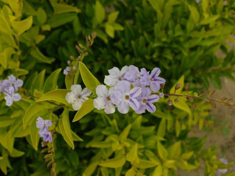 Błękita ogród Kwitnie na pięknym dniu zaświecającym słońcem obraz royalty free