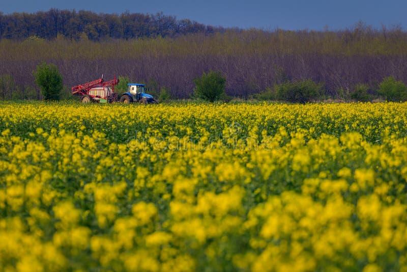 Błękitna ciągnikowa maszyneria używać w rolnictwa opryskiwania flicie od holowniczego na canola cozla polu zdjęcia royalty free