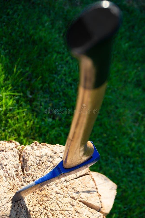 Błękitna cioska wtykająca w starym drzewnym trzonie zdjęcie royalty free