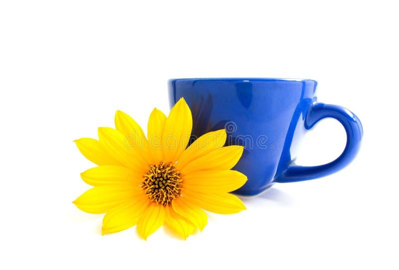 Błękitna filiżanka i żółty kwiatu heliopsis pojedynczy białe tło Pollen na kwiatów płatkach Jaskrawi kolory fotografia royalty free