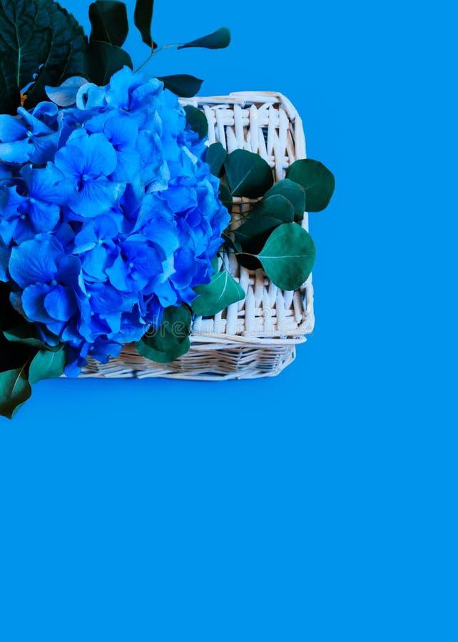 Błękitna hortensja odizolowywający tło liści bukieta bielu kopii koszykowej przestrzeni pocztówkowy słomiany odgórny widok obraz stock