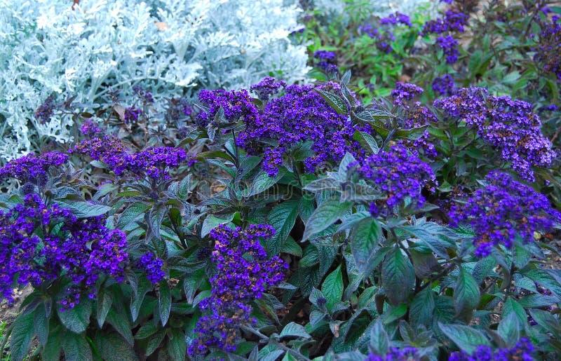 Błękitna jesień zdjęcia stock