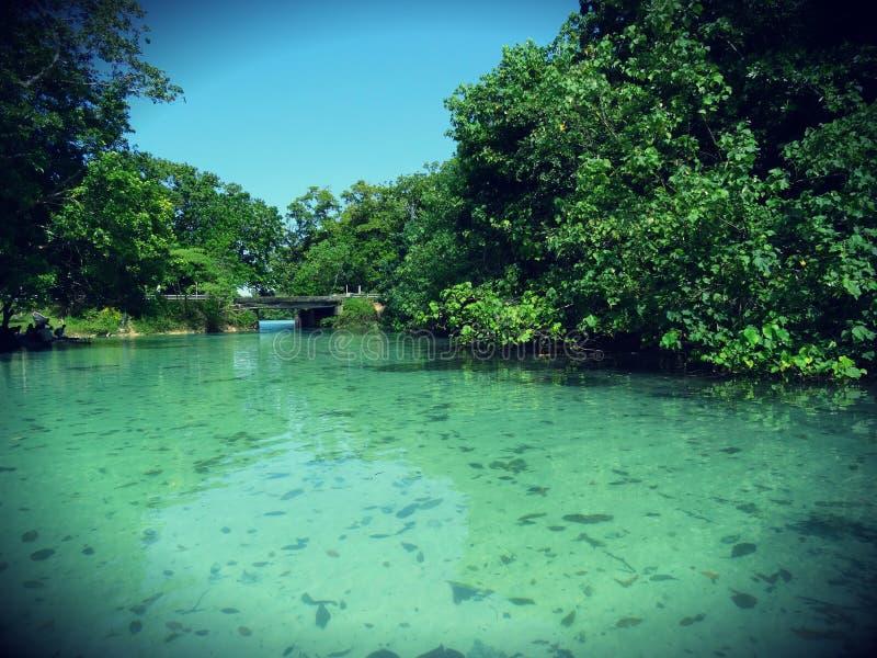 błękitna laguna trzciny zamazana zostaw ruch niewielkie tropikalny cukru obrazy royalty free