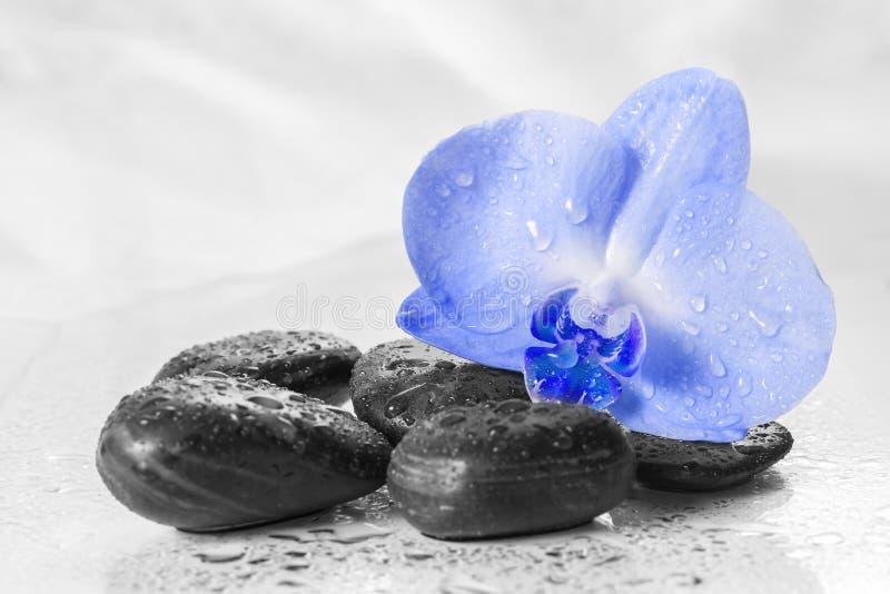 Błękitna orchidea z odbiciem w wodzie fotografia stock