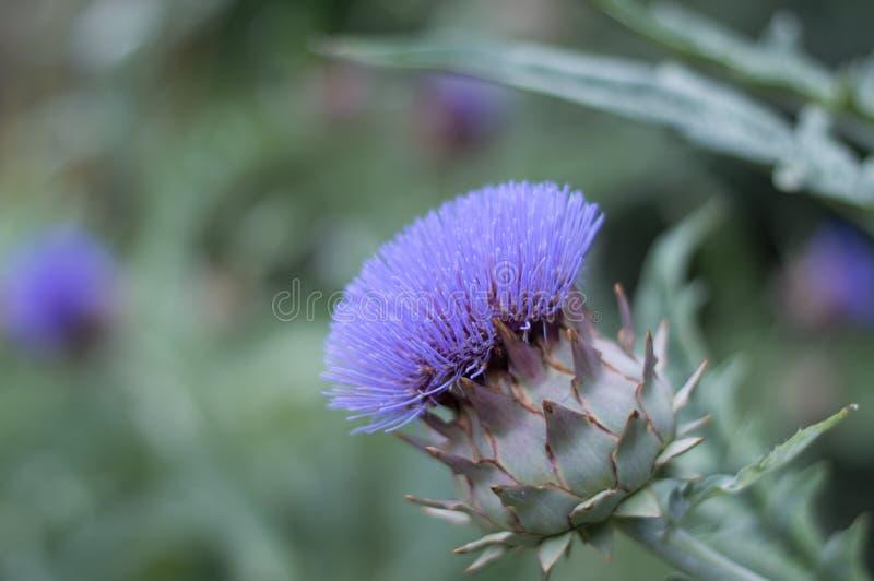 Błękitna roślina z bokeh skutkiem zdjęcie royalty free
