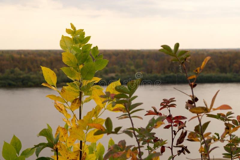 Błękitna rzeka z jesień lasem obraz stock