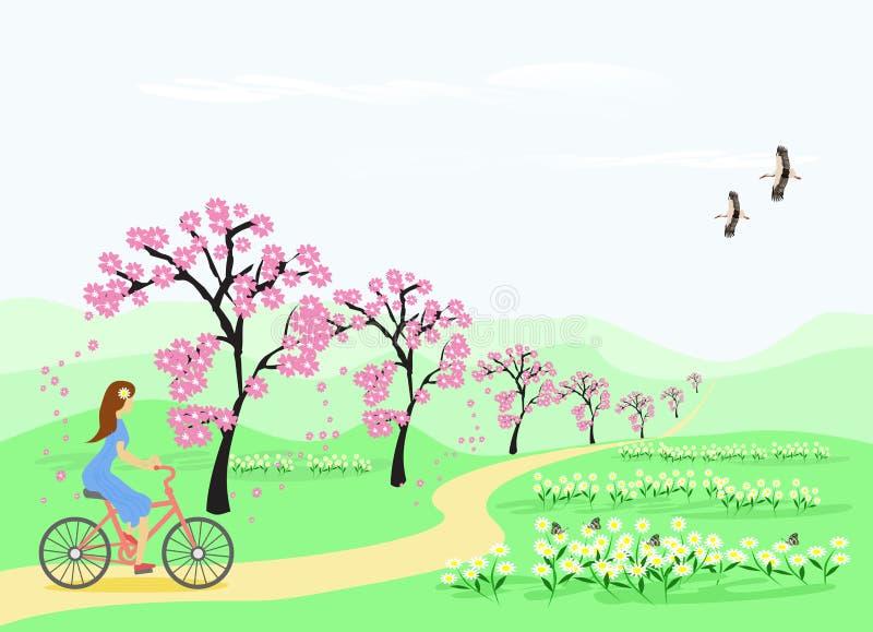 Błękitna spódnicowa kobieta jedzie bicykl wzdłuż ścieżki w kwiatu ogródzie i czereśniowym drzewie ilustracja wektor