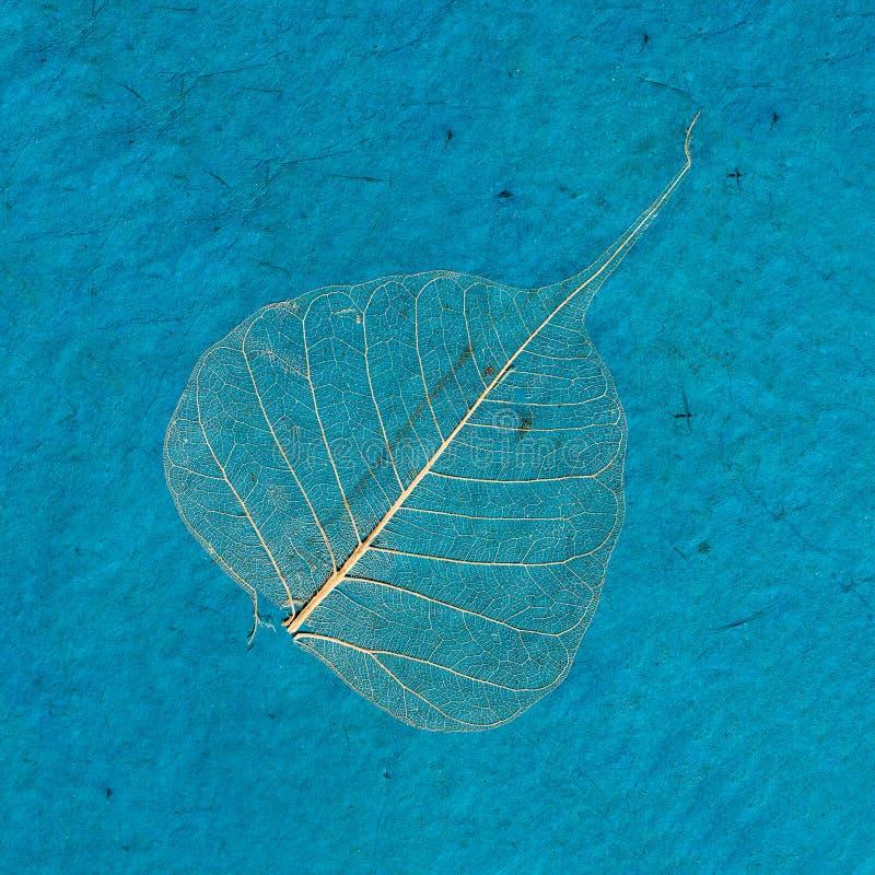 Błękitna sztuki powierzchnia z wysuszonym liściem zdjęcie royalty free