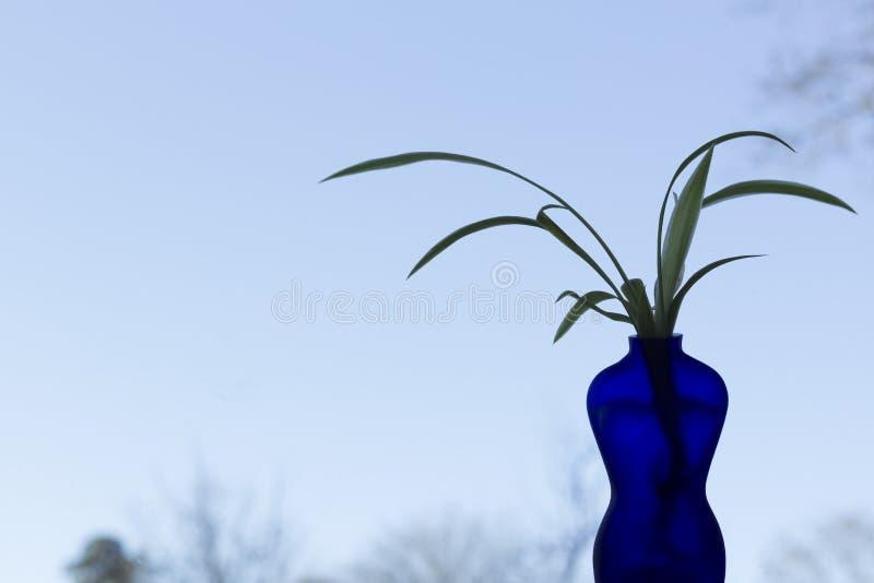Błękitna waza kształtująca jako kobieta z rośliną, błękitny niebo w tle obrazy stock