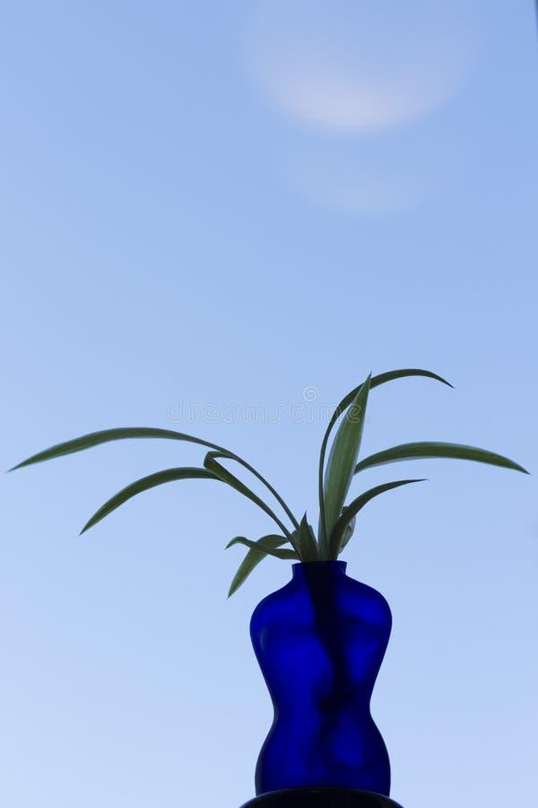 Błękitna waza kształtująca jako kobieta z rośliną, niebieskie niebo w tle obraz royalty free
