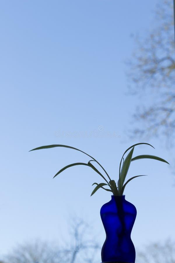 Błękitna waza kształtująca jako kobieta z rośliną, niebieskie niebo w tle obrazy stock