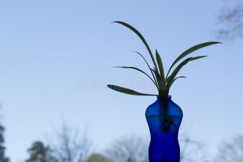 Błękitna waza kształtująca jako mężczyzna z rośliną, niebieskie niebo w tle zdjęcie royalty free