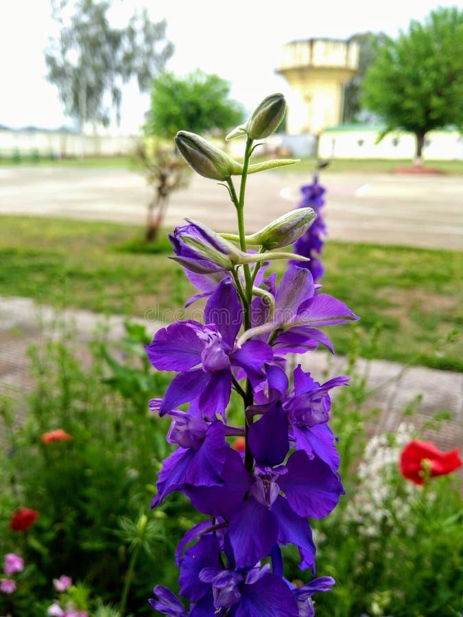 Błękitnawy kwiat obraz stock