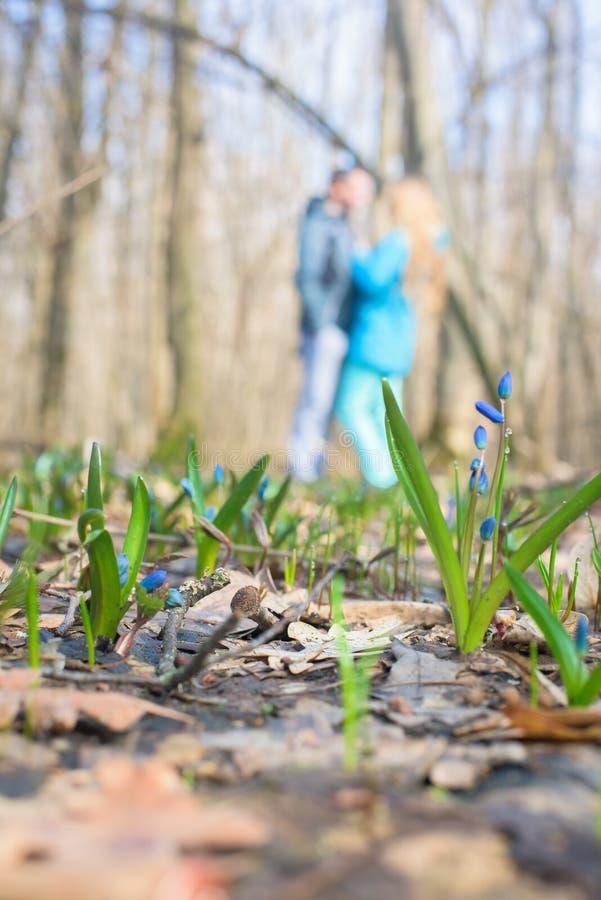 B??kitne ?nie?yczki, w g?r? wiosna kwitnie w lesie w Marzec T?o fotografia zdjęcie stock