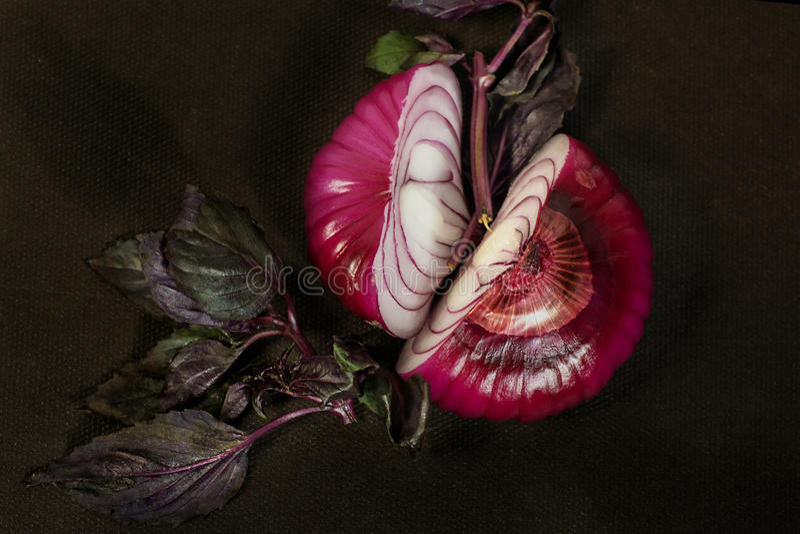 Błękitne cebulkowe żarówki cią w połówce z sprig purpurowy basil zdjęcia royalty free