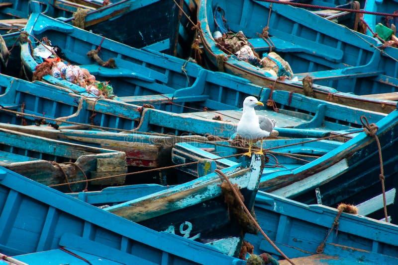 Błękitne drewniane łodzie rybackie z seagull w w górę portu Essaouira, Maroko obraz stock